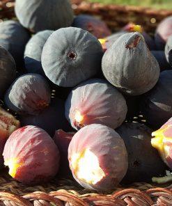 black fig & guava fragrance